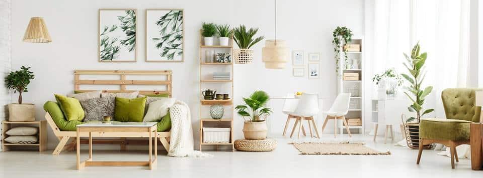 Rośliny w mieszkaniu, czyli trend ponadczasowy 🌿